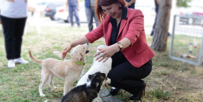 avcilar belediyesi nden kuduz asisi kampanyasi