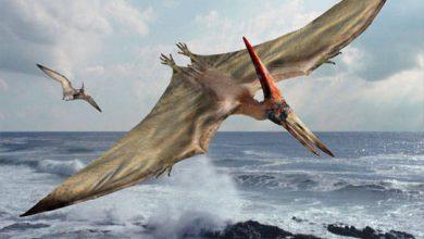 pterosaur fun facts
